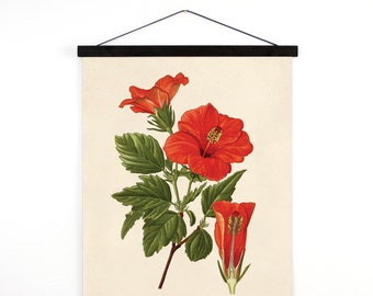 Pull Down Chart - Tropical Hibiscus Flower Vintage Botanical Reproduction Print. Educational Diagram Botany Garden Poster