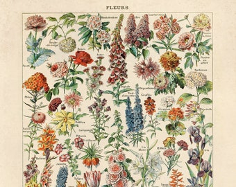 Vintage French Garden Flower Print. Fleurs - Le Petit Larousse by Millot. Educational Chart Diagram - B031P