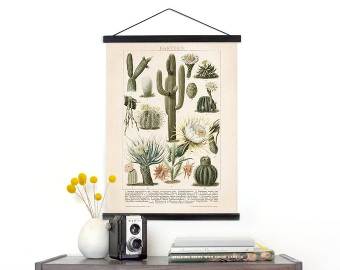 Featured listing image: Vintage Cactus Illustration Pull Down Chart - Canvas Palm Springs Diagram Print. Kakteen Botanical Desert Educational Wall Hanging - C001CV