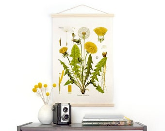 Botanical Dandelion Pull Down Chart Reproduction. Vintage Science Plate Print. Educational Diagram Botany Canvas - B010CV