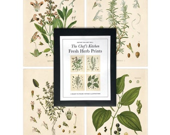 Vintage Chef's Kitchen Herb Print Set. Botanical Kitchen Art Posters Set of 4. Fresh Herbs Plants flowers art prints gallery wall - SET003