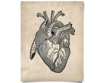 Vintage Anatomy Heart Print. Cardiovascular Vintage Beating Heart Educational Biology Chart Diagram Science Classroom - AT003P