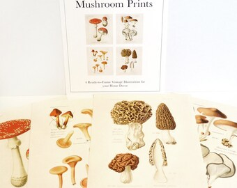 Vintage Forager's Guide Mushroom Print Set. Botanical Champignons French Fungi Set of 4. Diagram Kitchen Chantrelles  - SET002