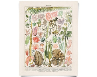 Vintage French Seaweed Algae Print. Poster Illustrated by Adolphe Philippe Millot. Le Petit Larousse Algues Coral Sea - B030P