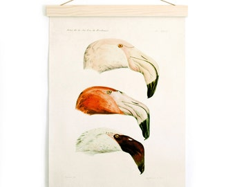 Pull Down Chart - Flamingos Vintage French Zoology Canvas - Illustration by Alphonse Tremeau de Rochebrune - Educational Birds - A023CV