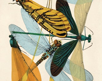 Vintage Dragonfly Illustration Print. French Seguy Plate 9 Variety of Dragonflies Chart Diagram Poster. Entomology - A007P