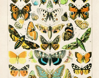 Vintage French Butterfly Print. Variety of Papillons and Moths by Millot Educational Chart Poster Papillons - A003P