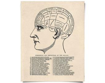 Vintage Anatomy Phrenology Chart Print w/ optional hanging frame