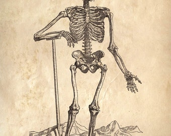 Anatomy Print Laughing Skeleton Vintage Reproduction Print. Human Body. Bones Educational Biology Chart Diagram Poster  - CP113