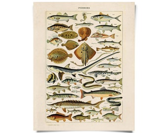 Vintage French Fish Chart Print. Poissons Le Petit Larousse Illustré by Millot. Educational Seal life animals - A012P