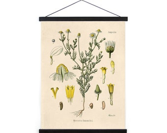 Vintage Chamomile Flower Canvas Wall Hanging - pull down chart reproduction B040CV