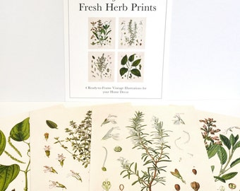 Vintage Botanical Herb Print Set. Kitchen Art Posters Set of 4. Vintage Fresh Herbs Plants flowers Vintage art prints gallery wall - SET003