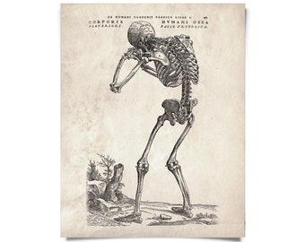 Vintage Anatomy Skeleton Back Print. Hunched Skeleton. Human Body. Bones. Andreas Vesalius Educational Chart Diagram - AT009P