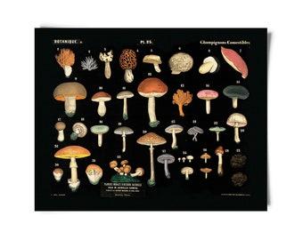Vintage Botanical Mushroom Black Print 2