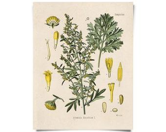 Vintage Wormwood Botanical Print - Artemisia Absinthium Absinthe Poster - Kohler's Medicinal Plant Guide antique chart - B015P