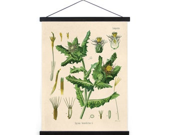 Vintage Blessed Thistle Flower Canvas Wall Hanging - pull down chart reproduction B041CV