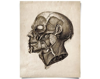 Vintage Anatomy Facial Sketch Print. Science and Medicine Educational Diagram Chart - AT010P