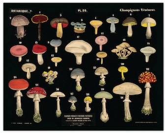 Vintage Black Mushroom Chart Print. French Reproduction from Planches Murales d'Histoire Naturelle -  Fungi Educational Poster - B022P