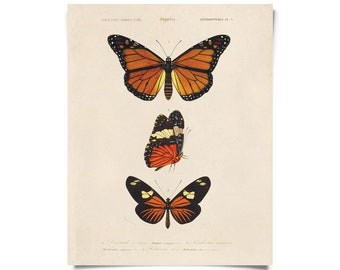 Butterfly Diagram by d'Orbigny Vintage Reproduction. Dictionnaire universel d'histoire naturelle. Educational Chart Print Poster - A030P