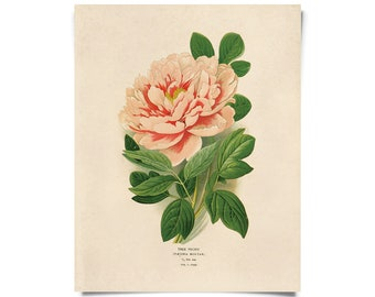Vintage Peony Flower Print. Educational Science Plate Flower Garden Seed Packet Chart Diagram - B023P