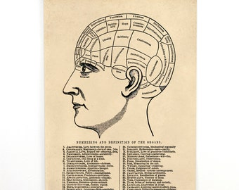 Pull Down Chart - Vintage Phrenology Diagram Reproduction. Hanging Canvas Print. Educational Human Anotomy Science Poster - AT015CV