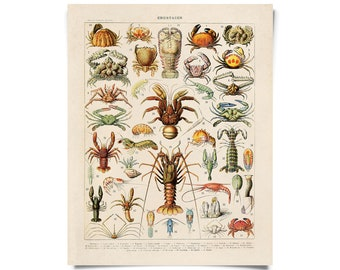 Vintage Crustaceans Diagram Print. Le Petit Larousse Ocean Educational Chart by Adolphe Millot Lobsters Crabs Sea Life