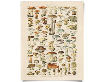 Vintage French Mushroom Print by Millot. Botanical Diagram Antique print- Variety of Mushrooms and Fungi Educational Chart Diagram - B032P