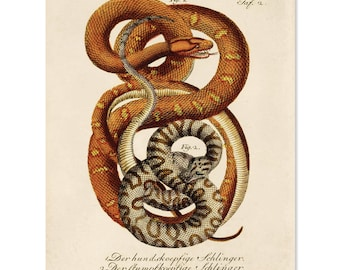 Vintage French Zoology Print - Illustrated Snakes by La Cépède - Educational Chart Poster Reptiles - A027P