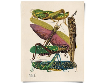 Vintage Grasshopper and other Insects Print. French Seguy Chart Diagram Poster. Entomology