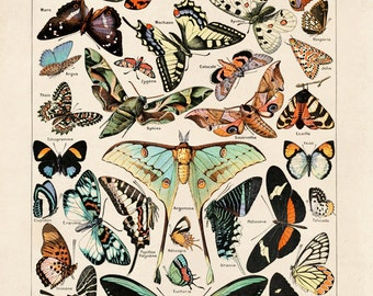 Butterfly Diagram 3 Papillons Poster Vintage Reproduction. Le Petit Larousse Illustré by Millot. Educational Chart Print Poster - A001P