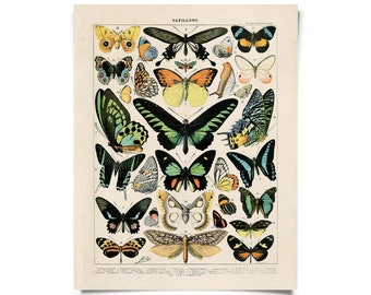 Vintage French Butterfly Print 1. Papillons Variety of Butterflies Educational Chart Diagram Poster - A002P