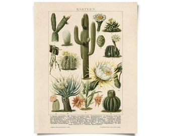 Vintage German Cactus Kakteen 2 Print. Botanical Desert Educational Diagram