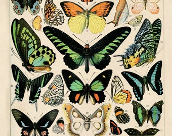 Vintage French Butterfly Print. Papillons Variety of Butterflies Educational Chart Diagram Poster - A002P