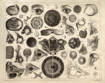 Vintage Anatomy Eye Chart Print -  Biology Optometry Optometrist Ophthalmologist Diagram human body - AT014P