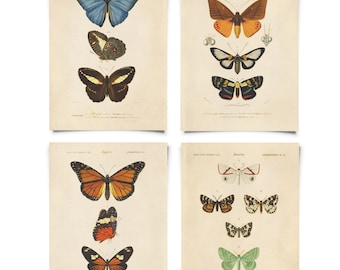 Vintage Bohemian Dreams Butterfly Print Set. Posters Set of 4. Diagram Entomology Chart moths gallery wall art pull down chart - SET004