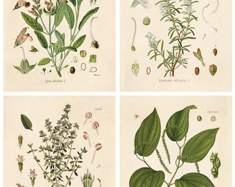 Botanicals / Plant Life