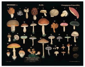 Vintage Black Mushroom Chart Print. French Reproduction from Planches Murales d'Histoire Naturelle -  Fungi Educational Poster - B021P