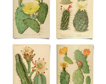 Vintage Palm Springs Cactus Print Set. Instant Gallery Wall Botanical blossom Set of 4. Desert Poster Pull Down Chart - SET001