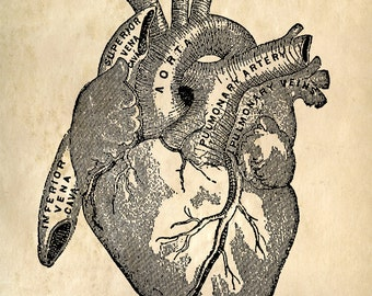 Heart Anatomy Print Reproduction Poster. Cardiovascular Vintage Beating Heart Educational Biology Chart Diagram Science Classroom  - CP101