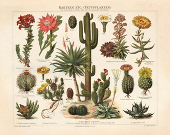 Vintage German Cactus Print. Palm Springs Kakteen Botanical Desert Educational Diagram Cactus Desert Poster Pull Down Chart - C002P