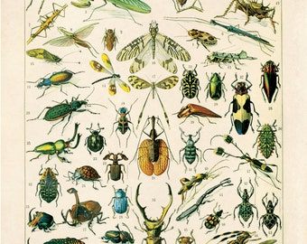 Vintage French Insects Print. Variety of Insects Educational Chart by Adolphe Millot Science Entomology Bugs - A004P