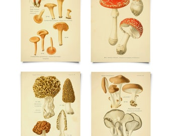 Vintage Forager's Guide Mushroom Print Set. Instant Gallery Wall Botanical Champignons French Fungi Charts Set of 4. Morels - SET002