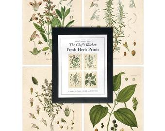 Vintage Botanical Herb Print Set. Kitchen Art Posters Set of 4. Vintage Fresh Herbs Plants flowers Vintage art prints gallery wall - SET003