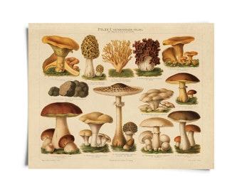Vintage Botanical Mushroom German Pilze 1 Print