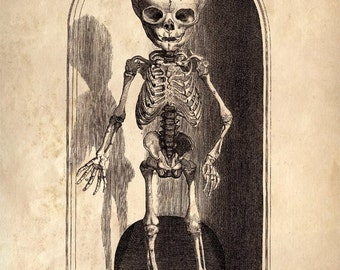 Vintage Anatomy Small Skeleton Print. Child's Skeleton Scientific Chart Educational Diagram Poster Biology Human Body - AT016P