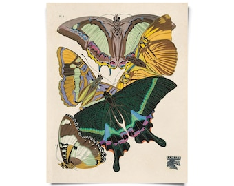 Vintage Butterfly Illustration Print. French Seguy Plate 8 Variety of Butterflies Chart Diagram Poster. Entomology - A006P