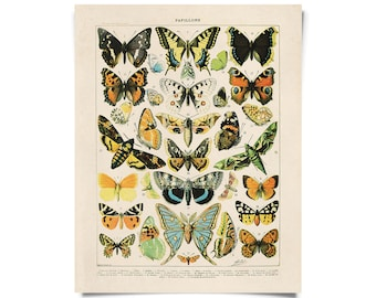 Vintage French Butterfly Print 2. Variety of Papillons and Moths by Millot Educational Chart Poster Papillons