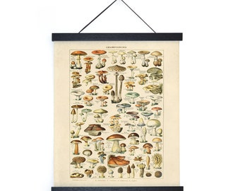Vintage Botanical French Mushroom Diagram Print w/ optional frame