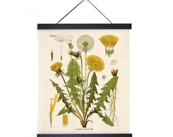Vintage Botanical Dandelion Flower Print w/ optional frame