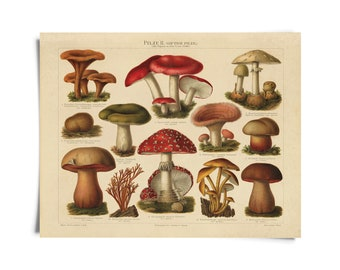 Vintage Botanical Mushroom German Pilze 2 Print